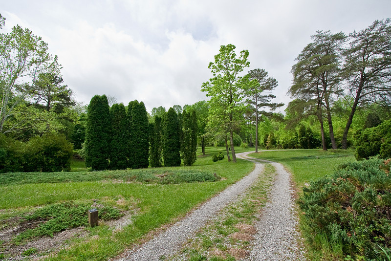 Path and Junipers