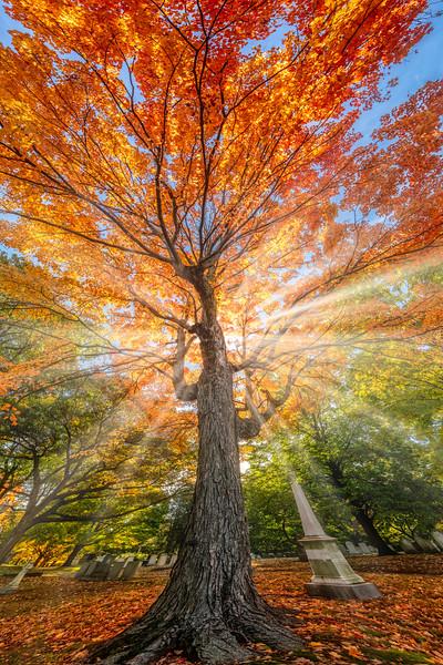 Fire Tree3.jpg