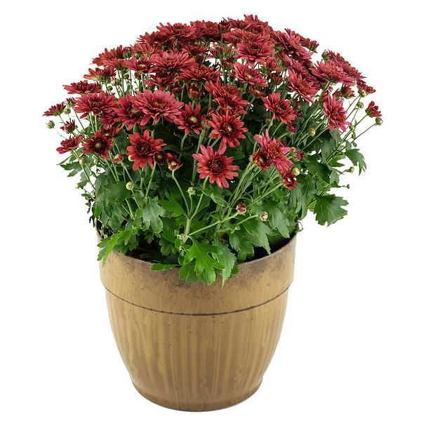 PP Flower Pot-XT1B1235.jpg