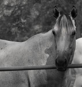 Rocking Horse 10-1-11