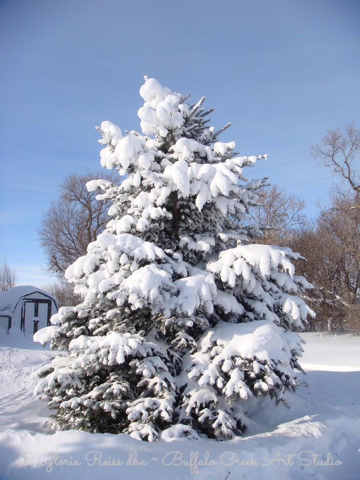 snowy tree after the storm