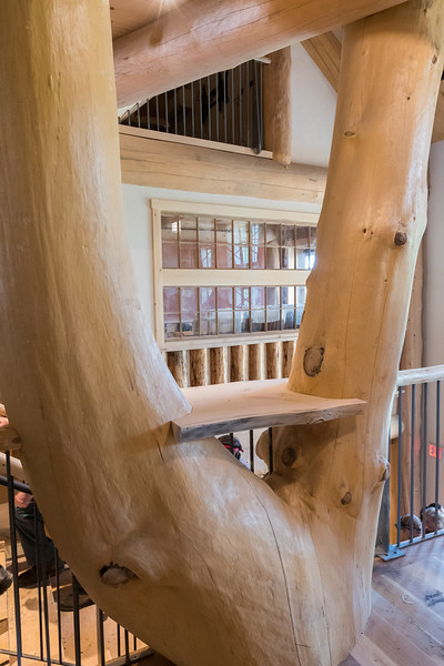 """The new Ravine Lodge includes an impressive """"slingshot"""" tree from Put's land, which here includes a nifty shelf. Photo by David Kotz '86."""