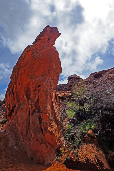 Nevada Las Vegas Red Rock Canyon0011.jpg