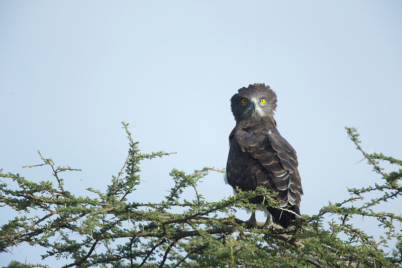 Serengeti_Feb_2013_FH0T4566.tiff.jpg