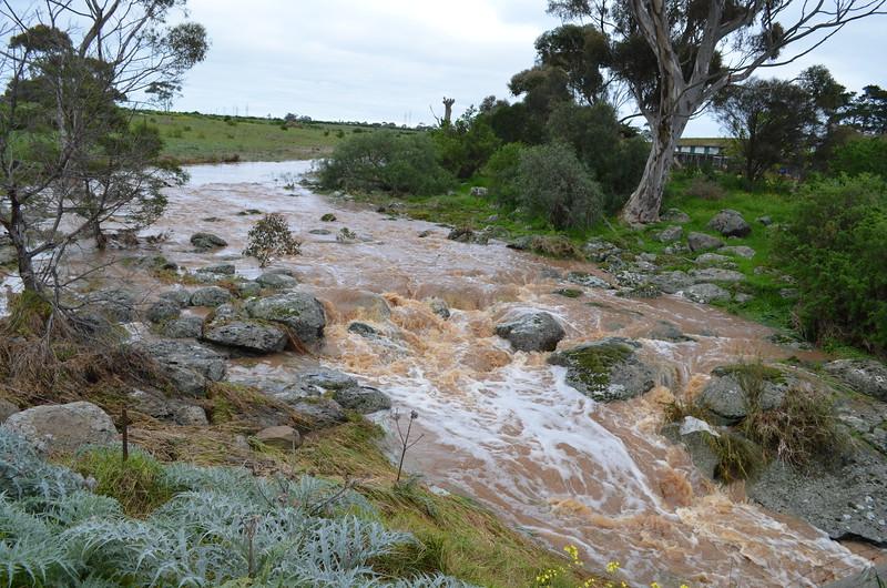 Dry Creek - Derrimut Road - Looking West - In Flood.JPG