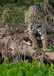 Pantanal, Brazil 2012