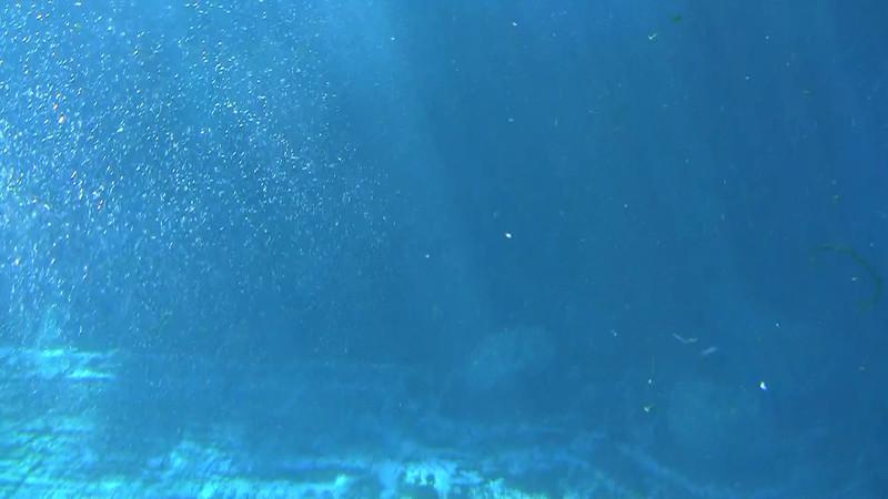 2010_Vancouver_Aquarium_7.mpg