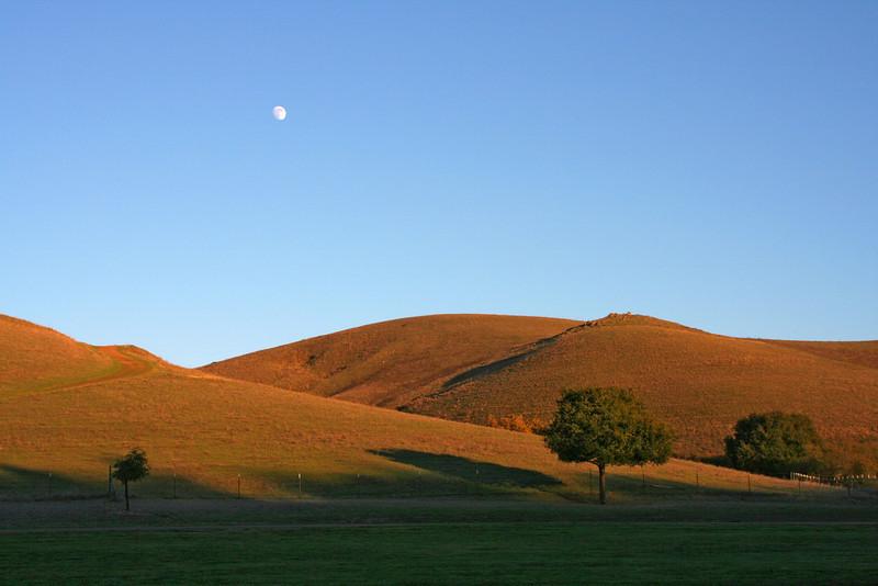 Moon over Garin Park, Hayward.
