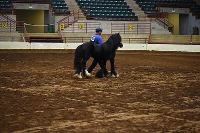 14 ld stallion halter