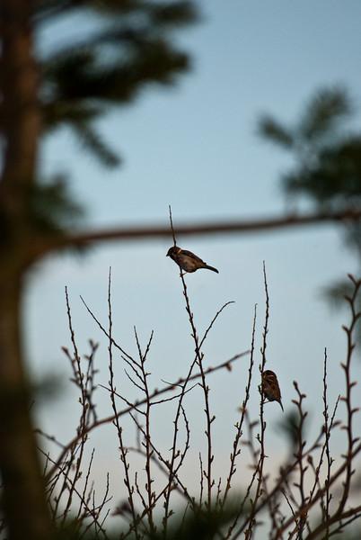 Birds-0140