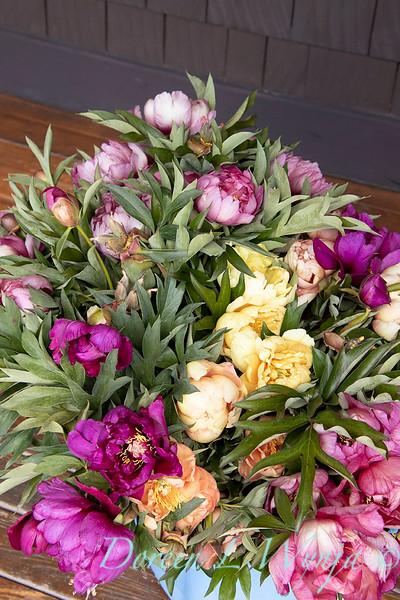 Peaonia - bucket of fresh cut peony flowers_0981.jpg