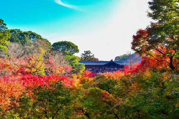 Kyoto Koyo 2019 Vol.1