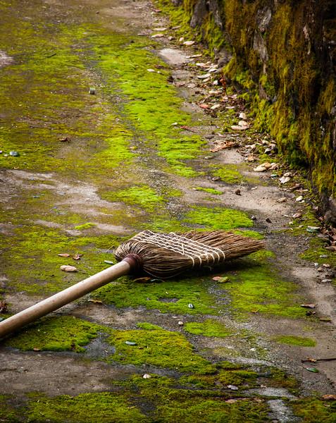 Broom, Picchetti Winery , Cupertino, California, 2009