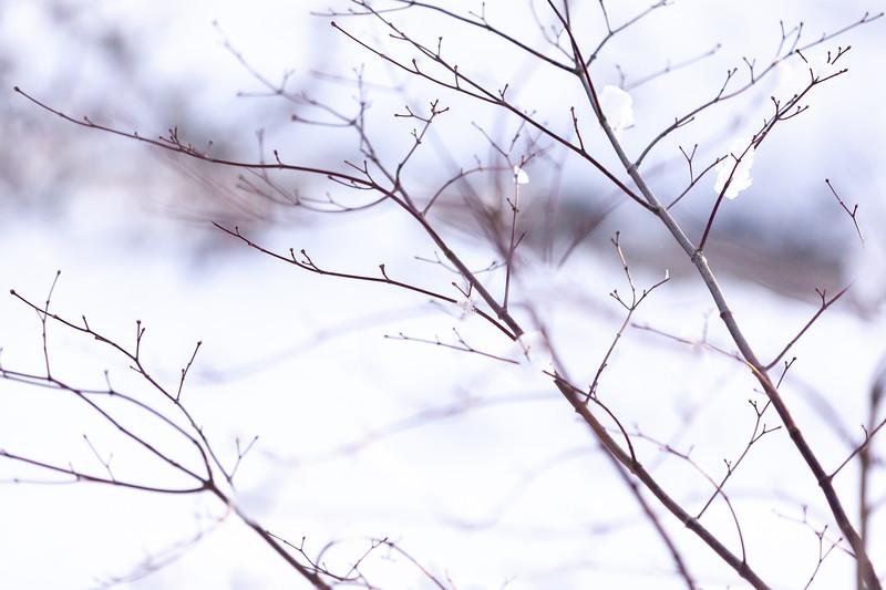 ALoraePhotography_SeniorNight_20190209_30041.jpg