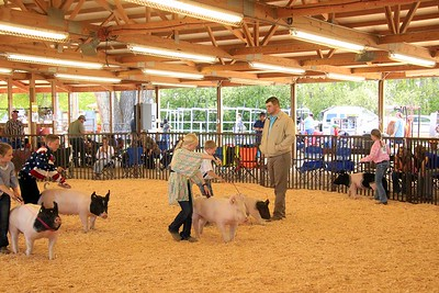 Junior Swine Showmanship Sat