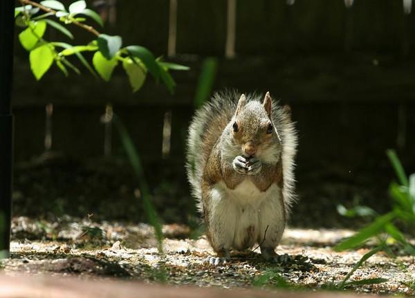 2008 - Squirrels