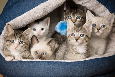 Adopted:Six Babies + Otto: Kermit, Not Kermit, New Nummie, Brownie, Princess, Wanderer