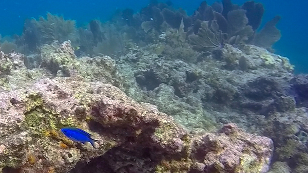 Ciesla-GOPR7671 - KC Blue Fish-0001.jpg