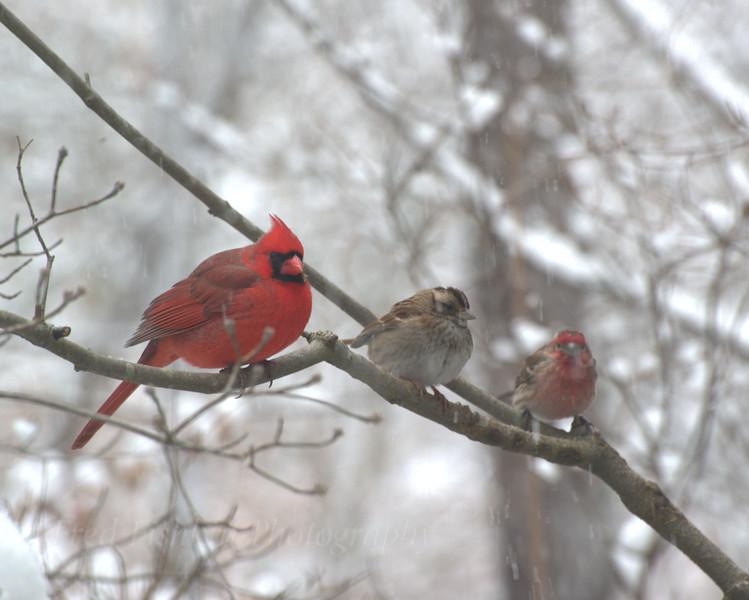Snowy morning diversity.jpg