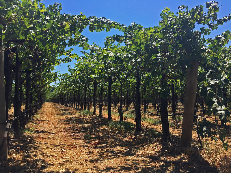 fun things to do in northern california - wineries in napa and sonoma