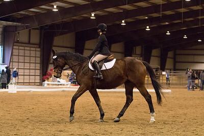 Horse 80
