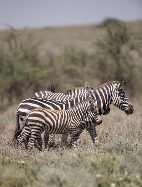 Tanzania_Feb_2018-424.jpg