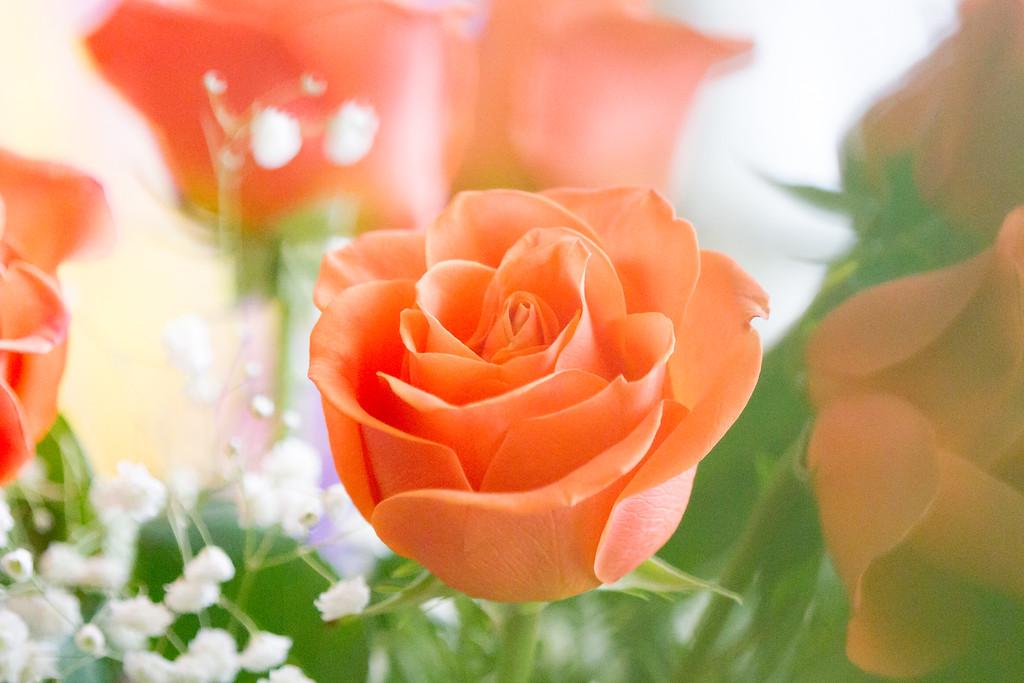 玫瑰花,情感对白