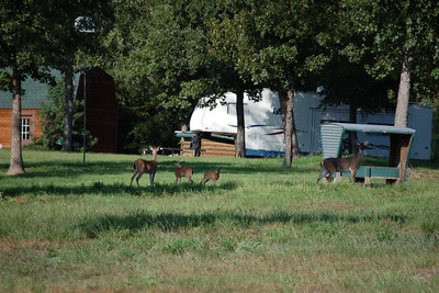 2010 09-11 Family deers in Montgomery Trace