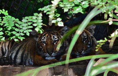 San Diego Zoo - Oct 15 & 16, 2011