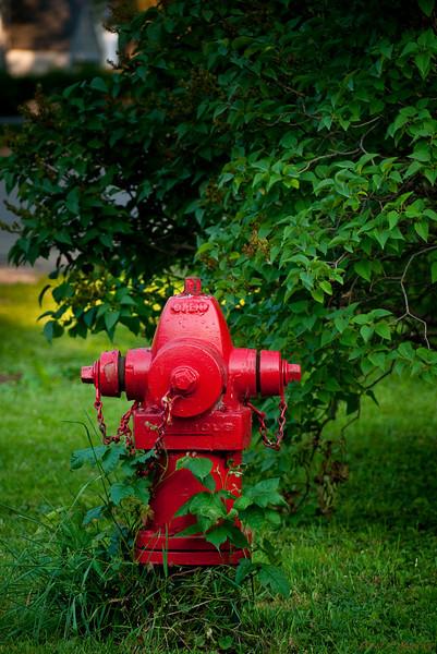 Leafy Hydrant