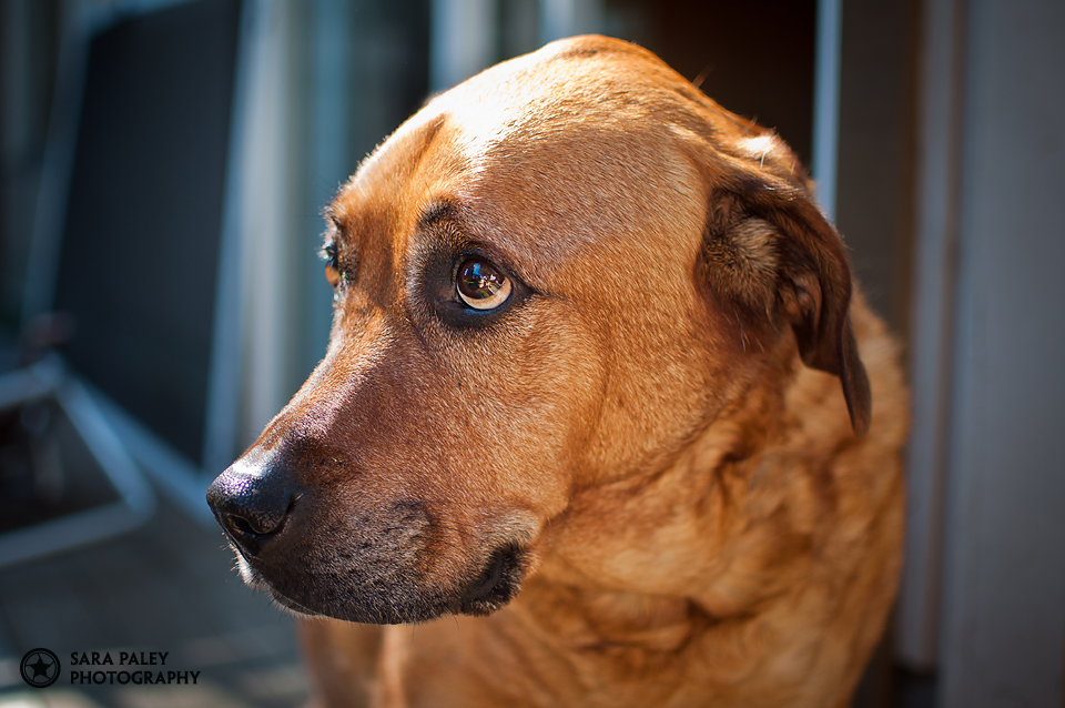 pet photography, dog portraits, furry friends