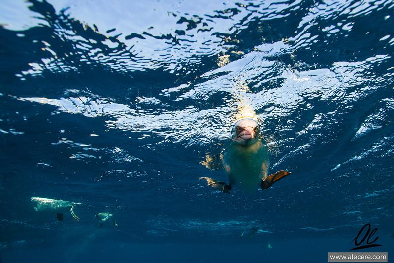 Any sardine left?