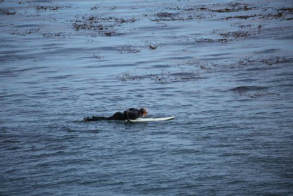 Surfing Photos, Santa Cruz, Feb 1, 2015