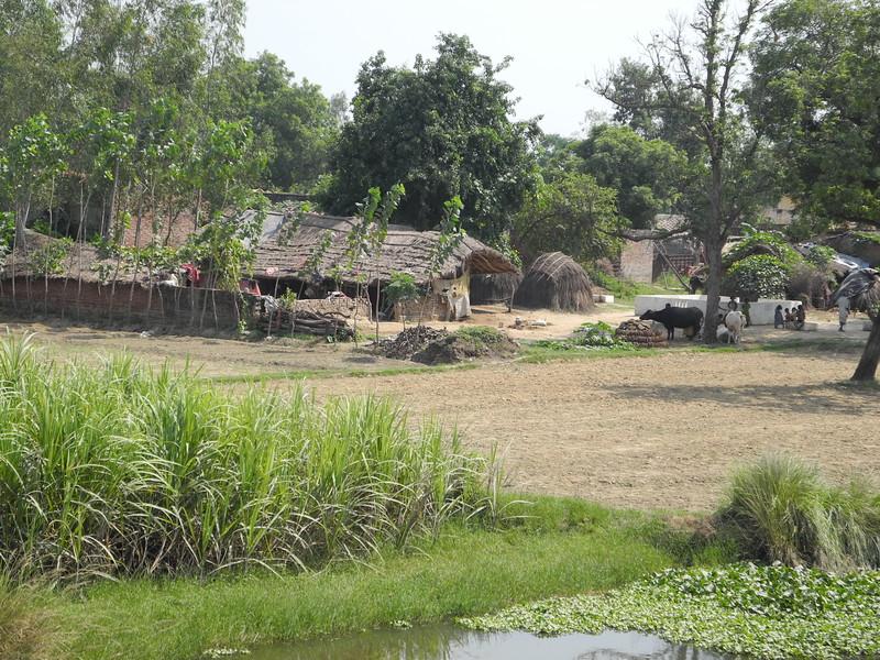 india2011 729.jpg