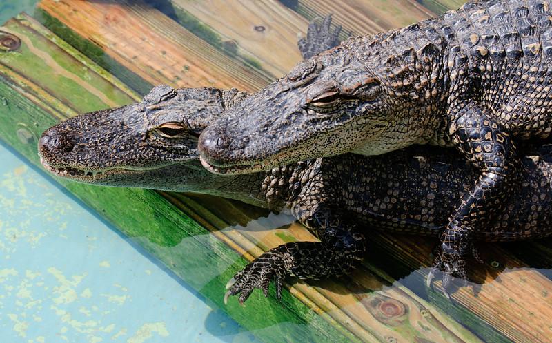 Gatorland - March 2, 2011