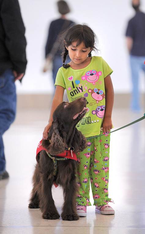 ". ""CC\"" with new pal Liliana Garibay, 5. New program at LAX called PUP (Pets Unstressing People) uses certified dogs to walk the terminals with their volunteer owners to greet passengers and help ease the tensions of modern airline traveling.   Photo by Brad Graverson 4-11-13"