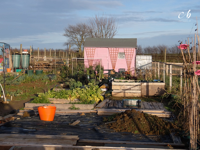 DSCF0076 Sheds on the allotments.jpg