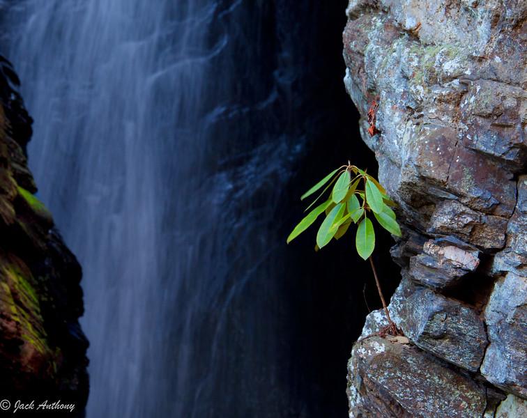 20120227-raven cliff falls_5493-2.jpg