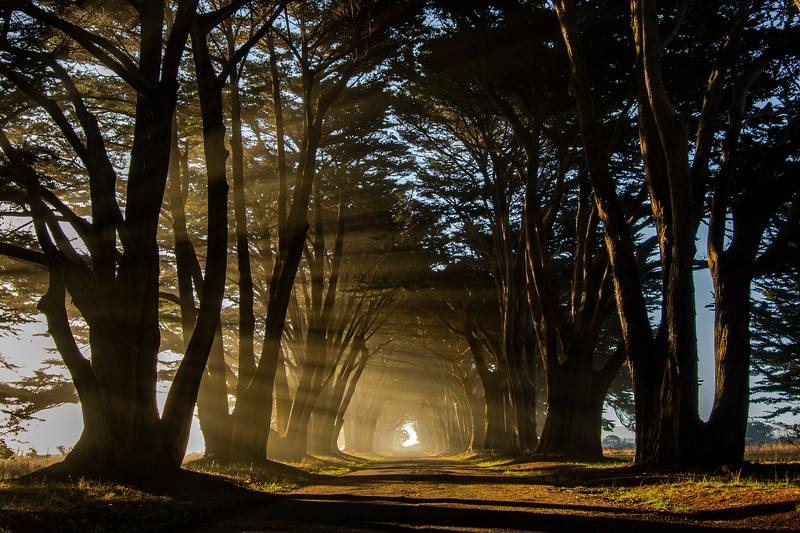 Golden Rays through the Cypress Tunnel