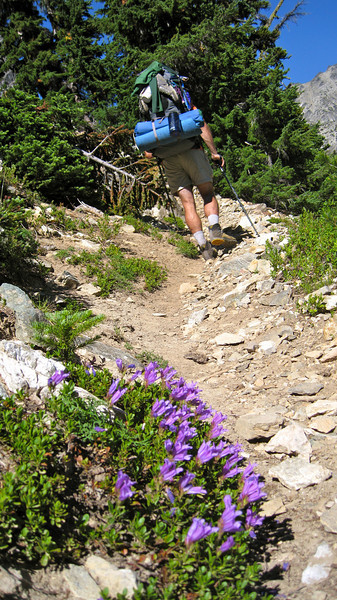Penstemon and trail.
