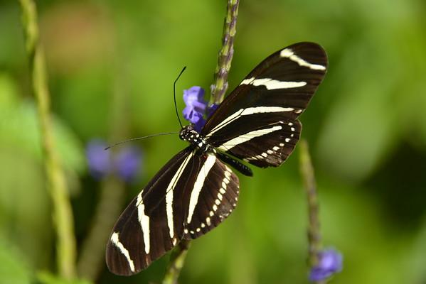 Butterflies, dragonflies, flowers