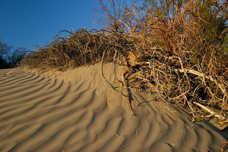 Sand Dunes, Death Valley National Park