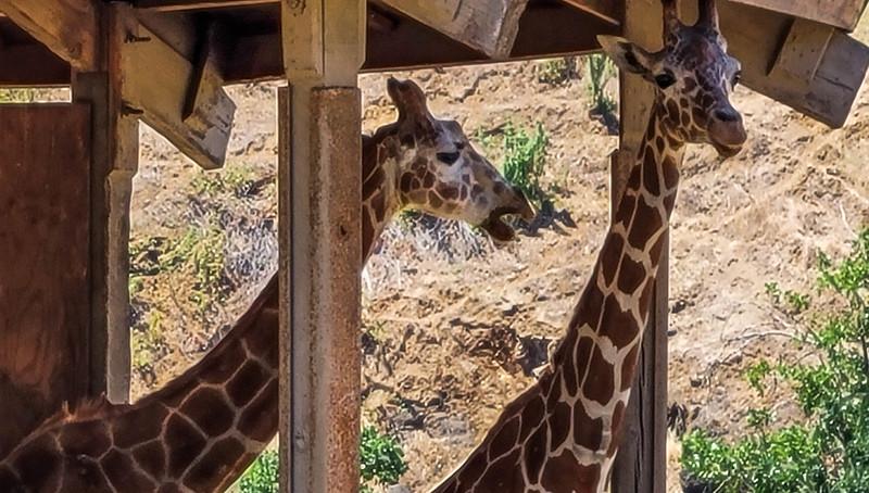 07-05-2021 Winston Wildlife Safari-20.jpg