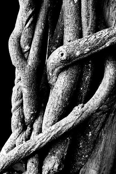 Tangled ©Todd Grinonneau
