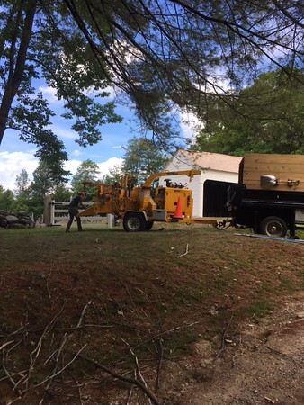 Potter Tree Care work August 2020