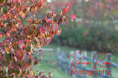 Seasons-Fall