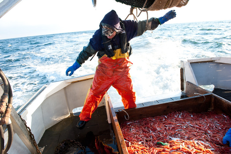 20. Shrimping with Proctor Wells, Gulf of Maine, February 2013.