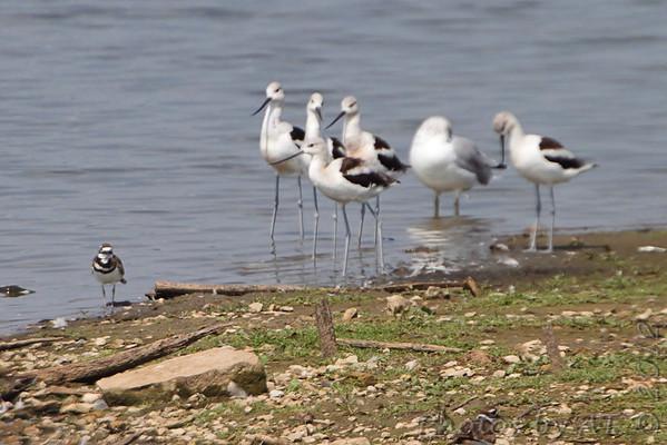 2012-09-06 Riverlands Migratory Bird Sanctuary