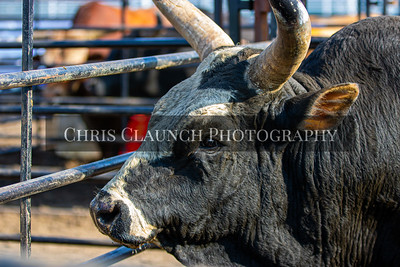 Amped Up Pro Bull Tour - Chillicothe 2019