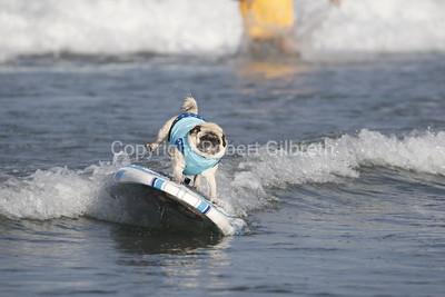 Del Mar Surf Dog Surf-A-Thon 2017